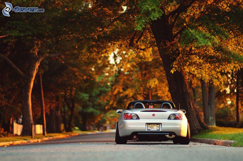 Honda S2000, kabriolet, ulica, żółte drzewa