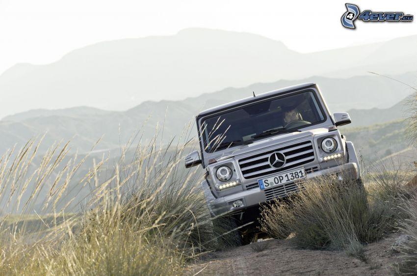 Mercedes-Benz G, wysoka trawa, teren