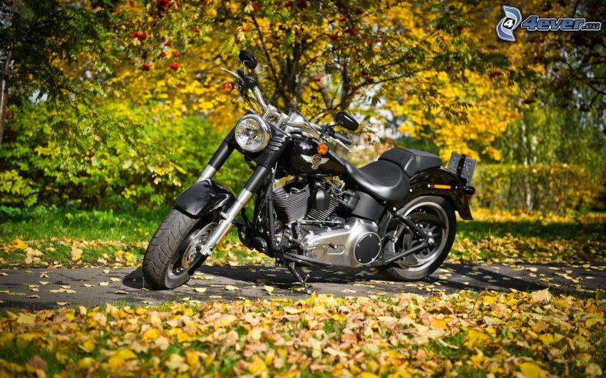 Harley-Davidson, opadnięte liście, chodnik