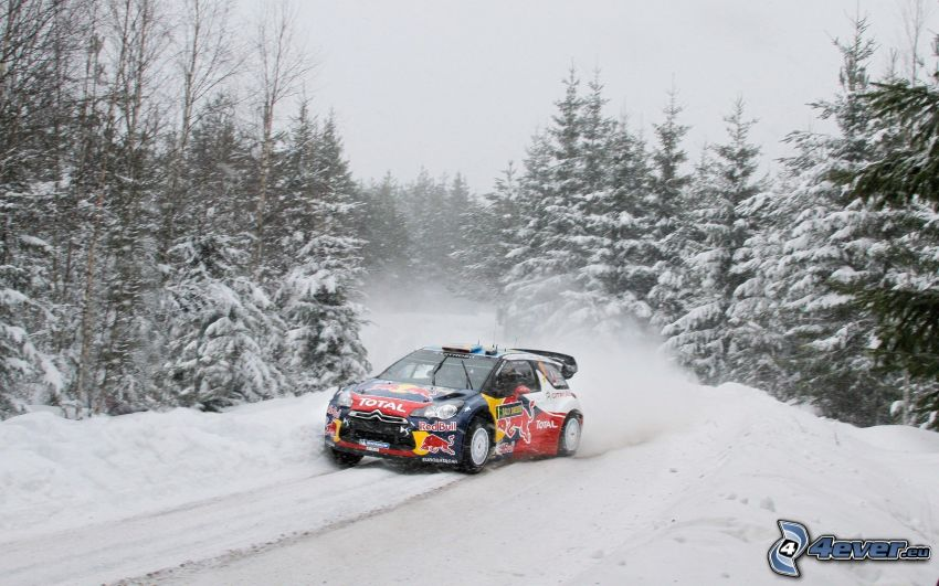 Citroën DS3, auta wyścigowe, zaśnieżony las iglasty