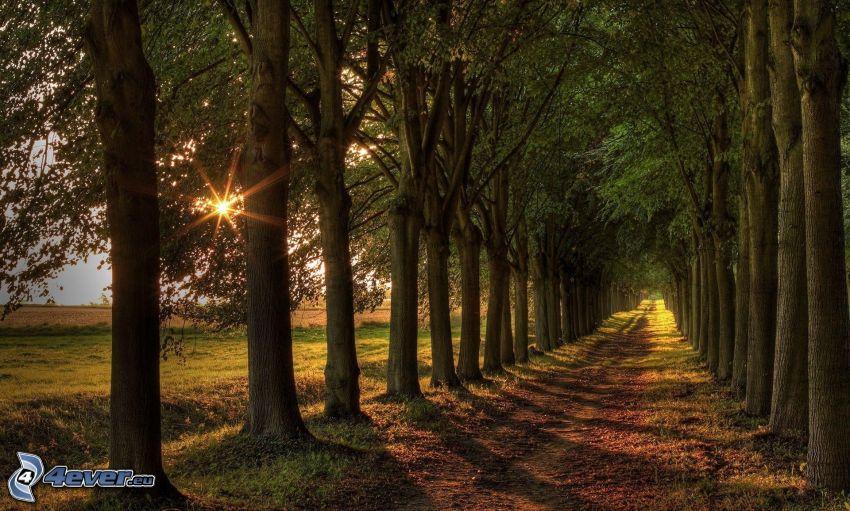 aleja drzew, promienie słoneczne