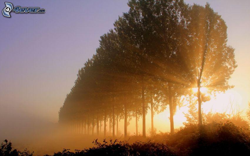 aleja drzew, zachód słońca za drzewem