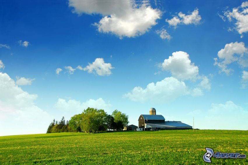 amerykańska farma, pole, gaj, chmury