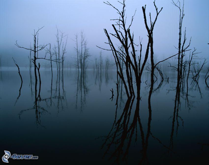 bagno, suche drzewa, mgła