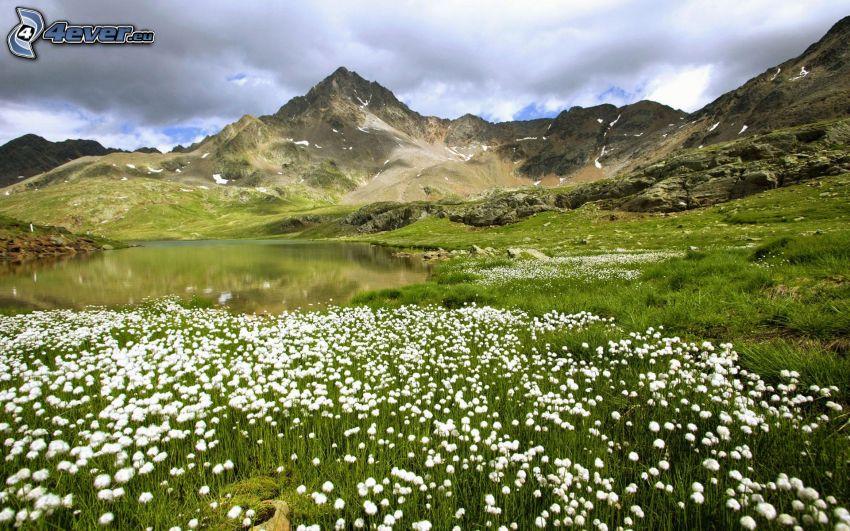 białe kwiaty, jeziorko, skaliste wzgórza