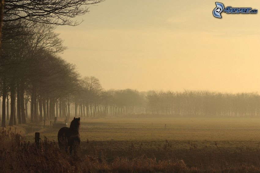 brązowy koń, łąka, las, mgła