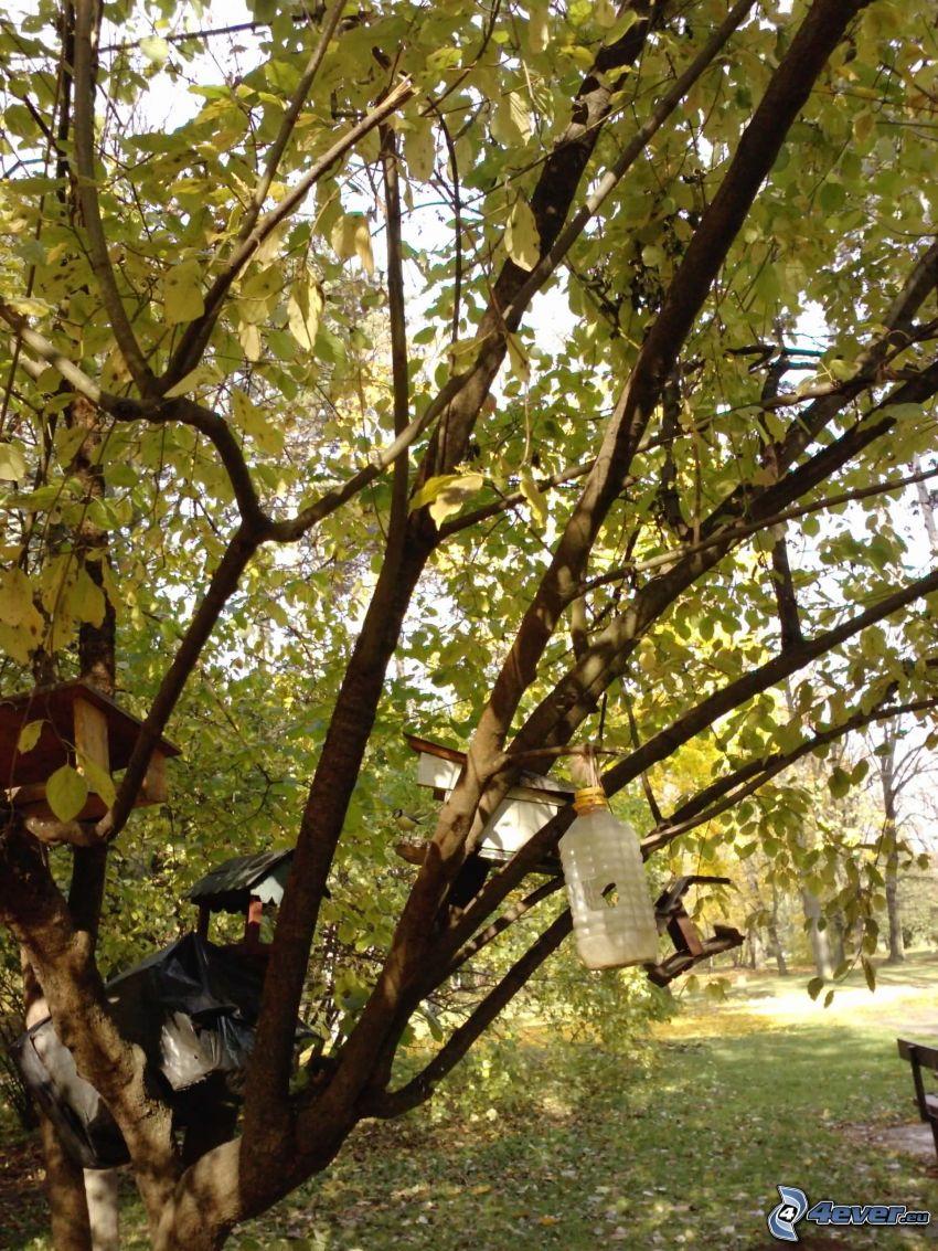 budka dla ptaków, konary, liście