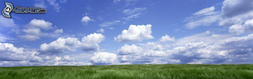 chmury, pole