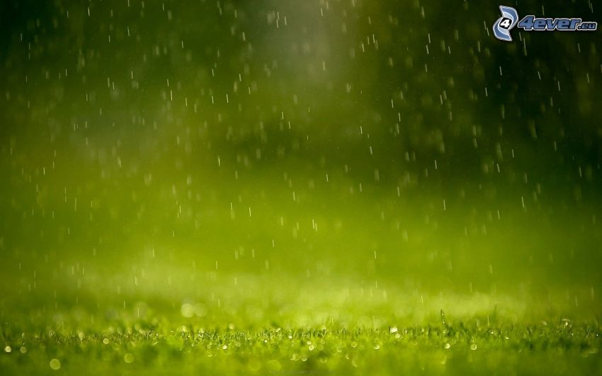 deszcz, krople