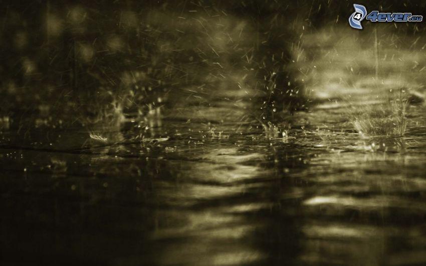 deszcz, krople wody