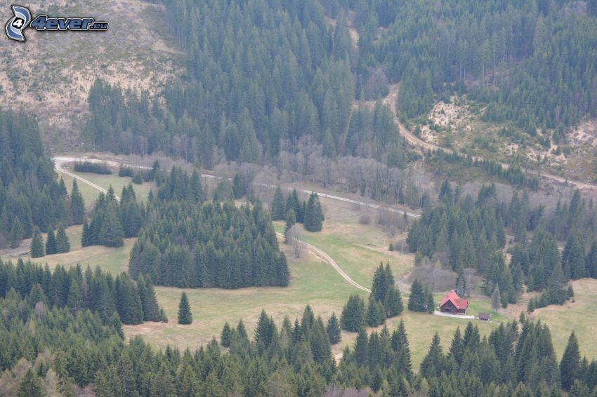 dolina, chata, Stožky, las iglasty