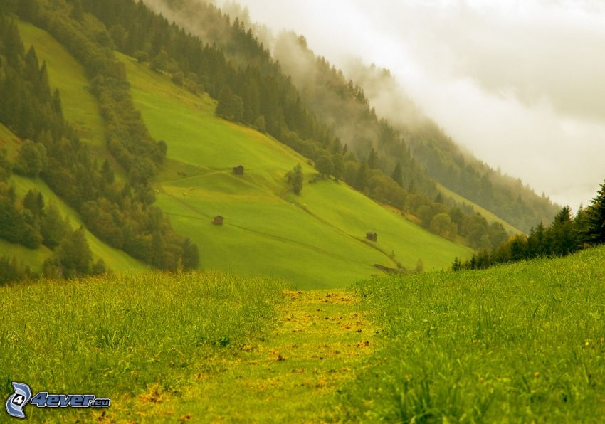 dolina, lasy i łąki, mgła