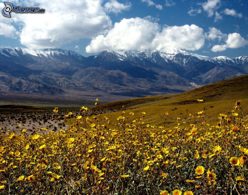 Dolina Śmierci, pasmo górskie, polne kwiaty, łąka