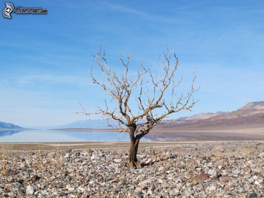 Dolina Śmierci, suche drzewo, jezioro