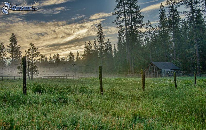 domek, ogrodzenie z drutu, las iglasty, łąka, chmury