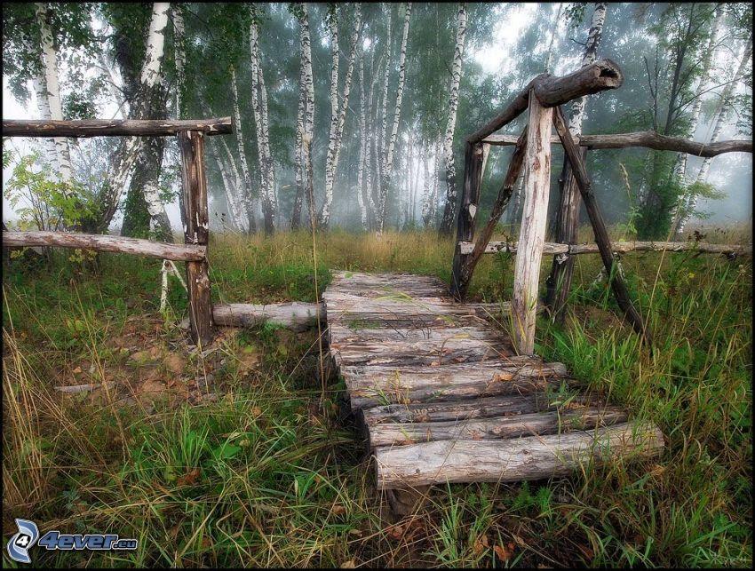 drewniany most, las brzozowy, trawa, mgła