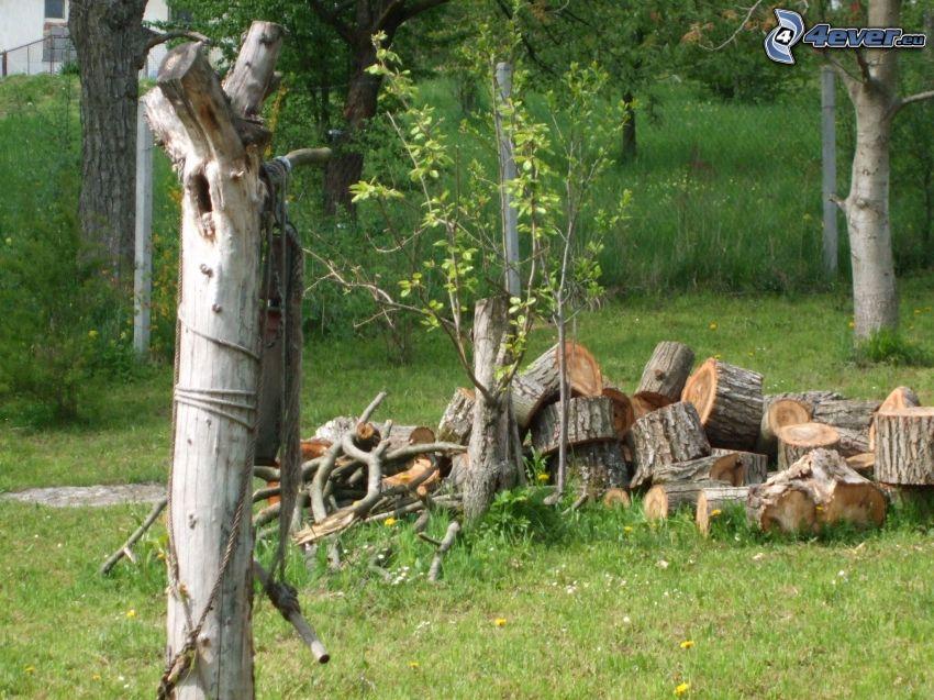 drewno, drzewo