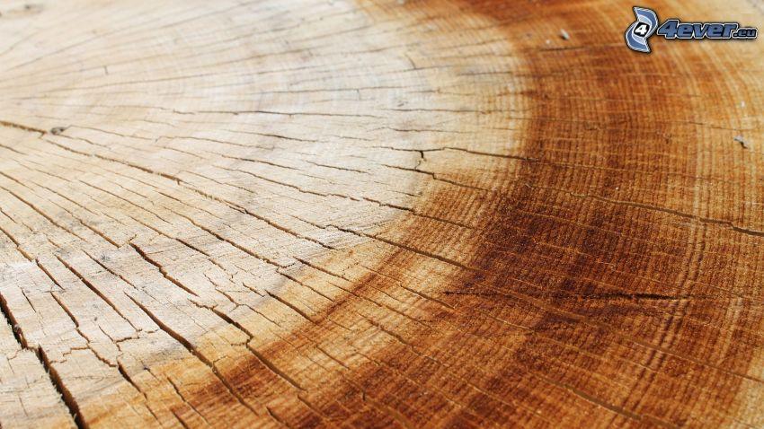 drewno, słoje, pęknięcia