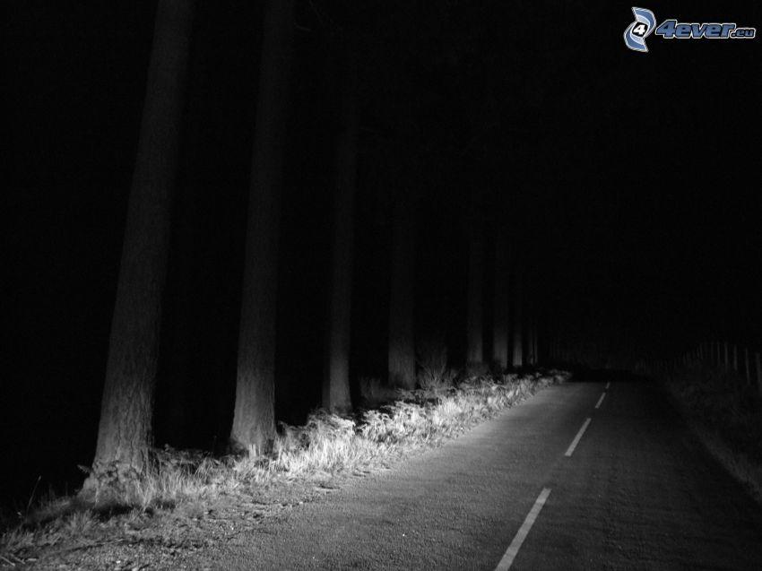 Droga przez las, las nocą, czarno-białe