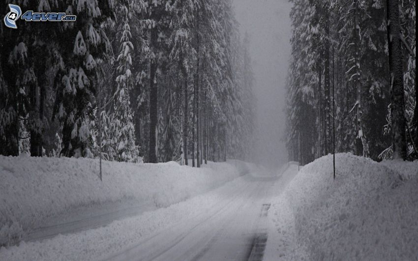 droga zimą, Droga przez las, zaśnieżony las