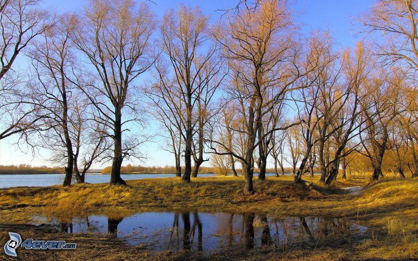 drzewa, jeziora, kałuża