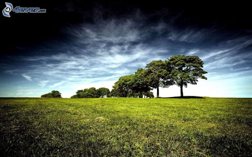 drzewa, łąka, ciemne niebo