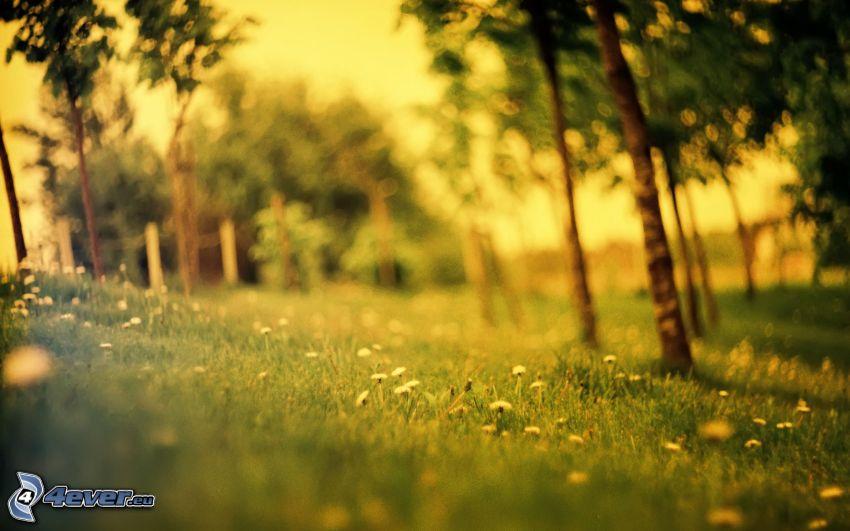 drzewa, łąka