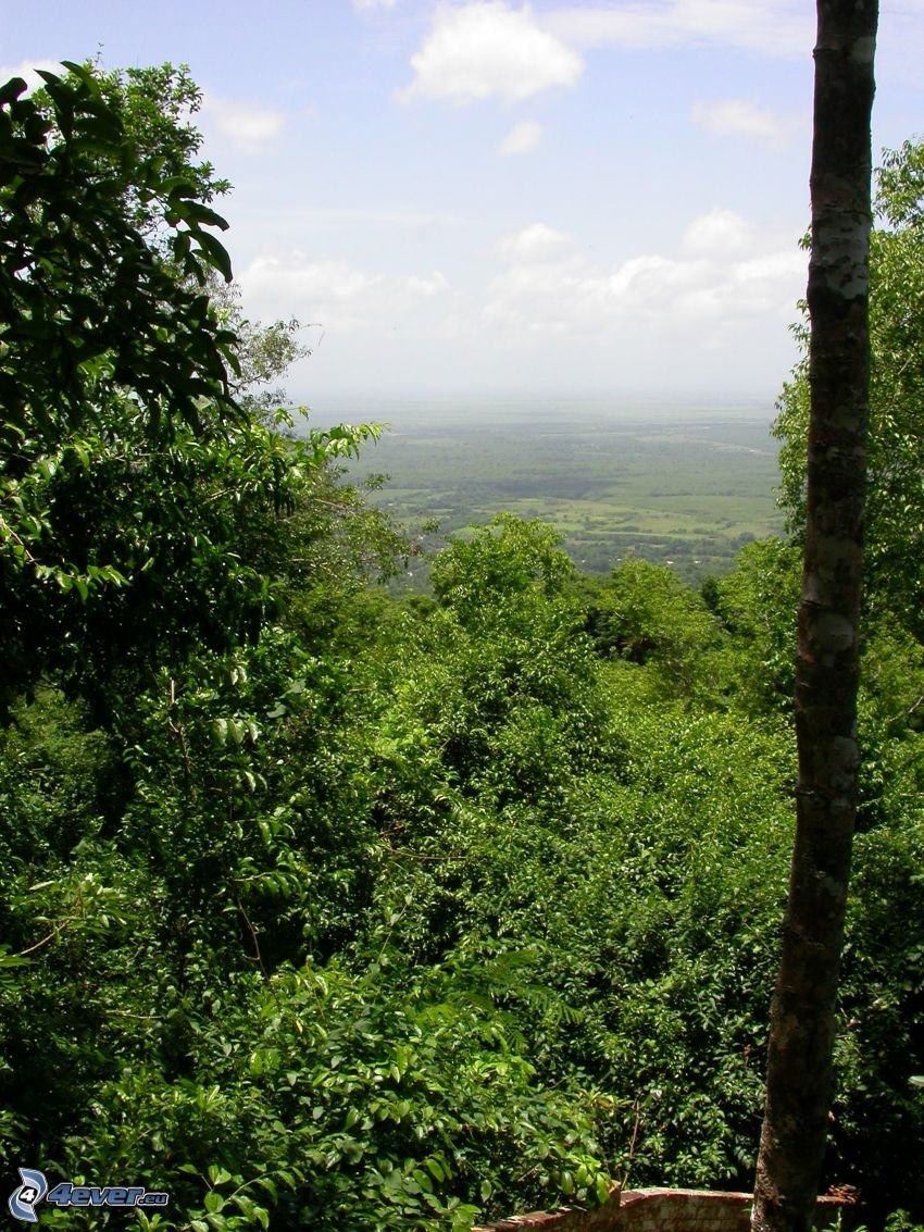 drzewa, las, dolina