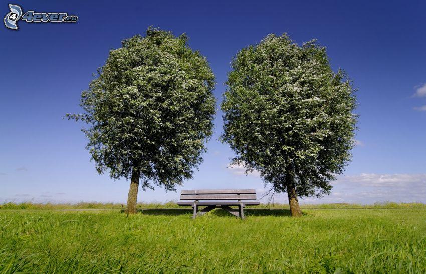 drzewa, ławeczka, zielona łąka