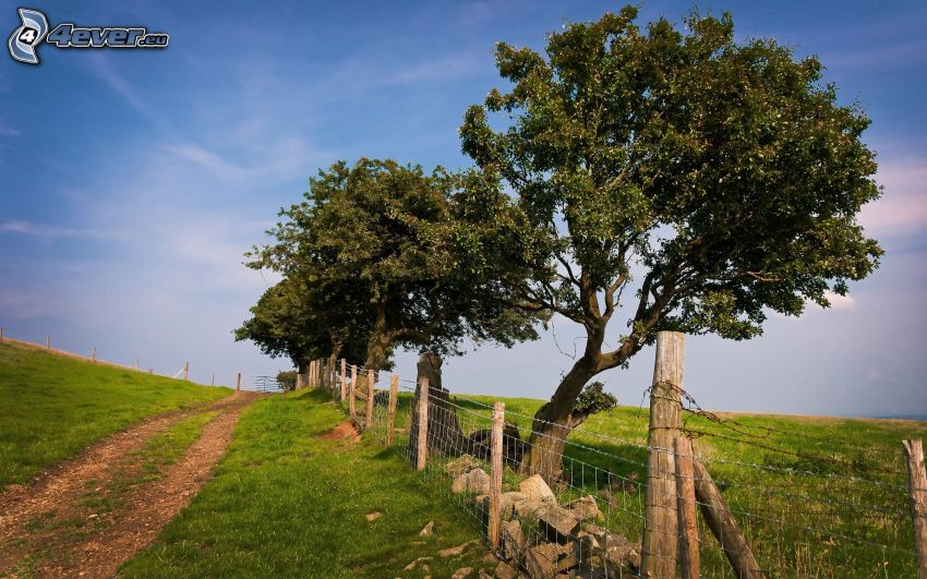 drzewa, polna droga, ogrodzenie z drutu, łąka