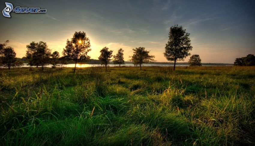 drzewa, zachód słońca, trawa