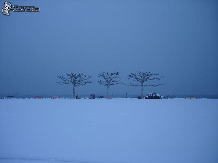 drzewa, zaśnieżona łąka
