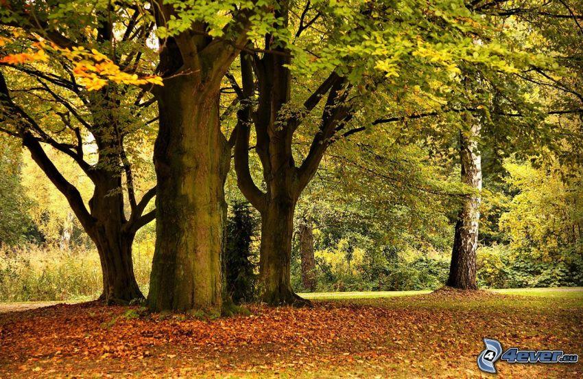Drzewa w parku, opadnięte liście
