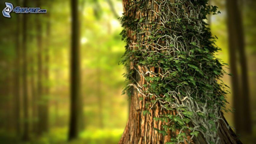drzewo, bluszcz