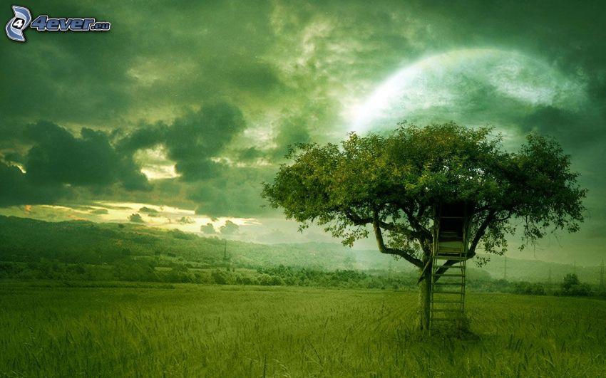 drzewo, drzewostan, łąka, chmury