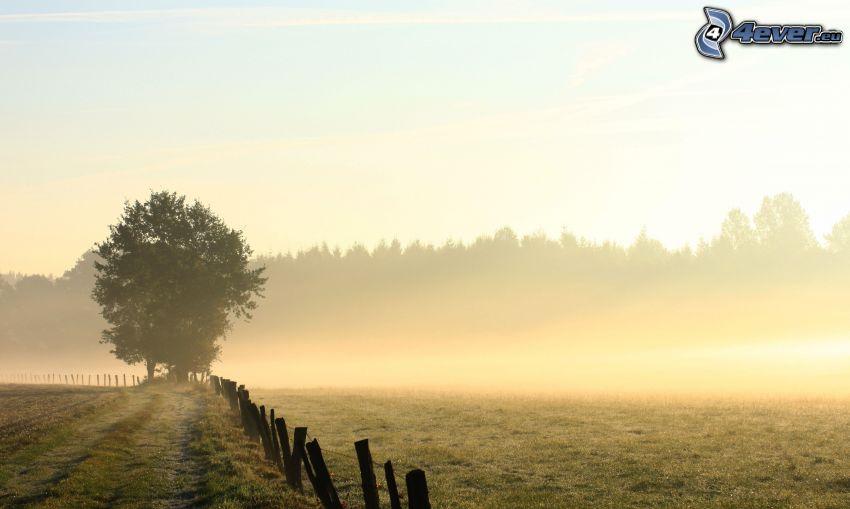 drzewo, płot, łąka, przyziemna mgła