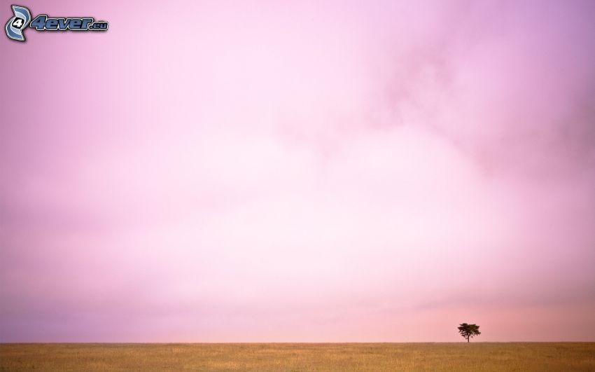 fioletowe niebo, pole, samotne drzewo