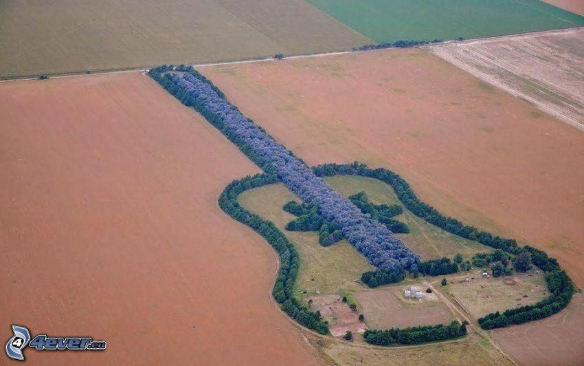 gitara, drzewa, pola