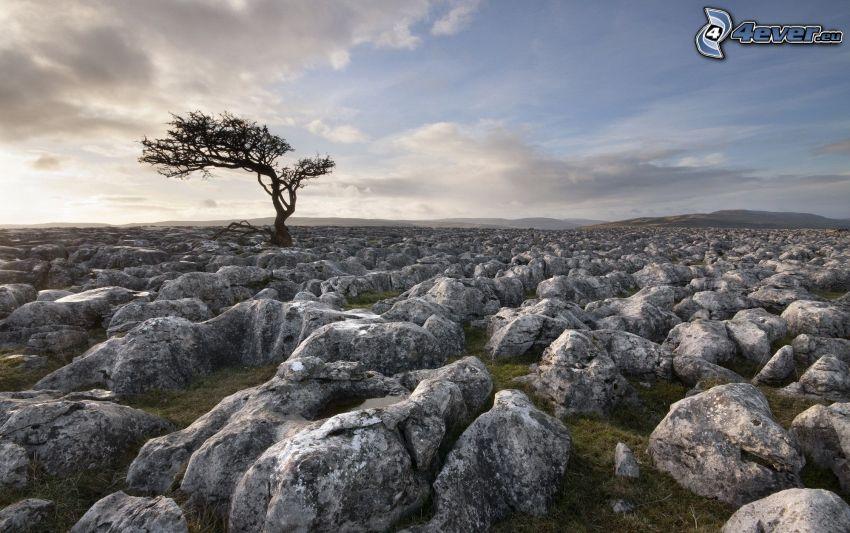 głazy, samotne drzewo