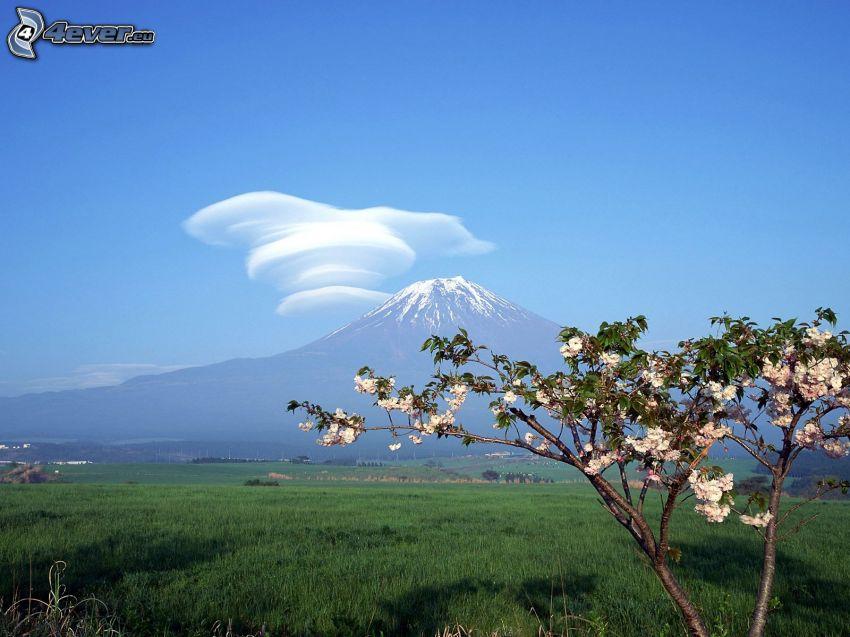 Góra Fuji, chmury, niebo, rozkwitnięte drzewo, zielona łąka