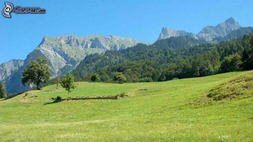 Alpy, łąka, las