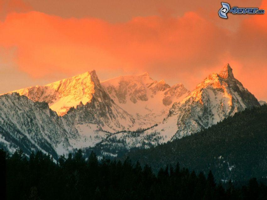 Bitterroot Mountains, Montana, wzgórze, las
