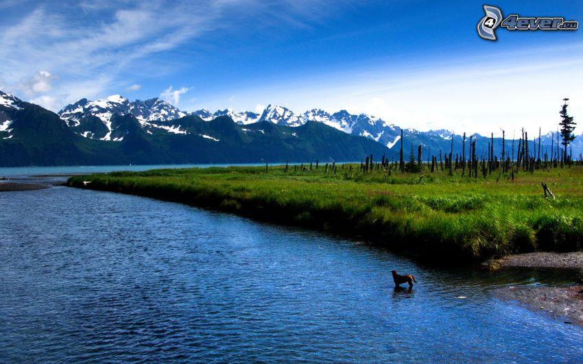 jezioro, brązowy pies, zaśnieżone góry