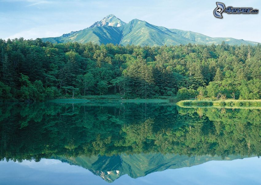 jezioro w lesie, drzewa, góra