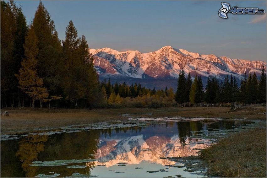 kałuża, drzewa iglaste, zaśnieżone góry