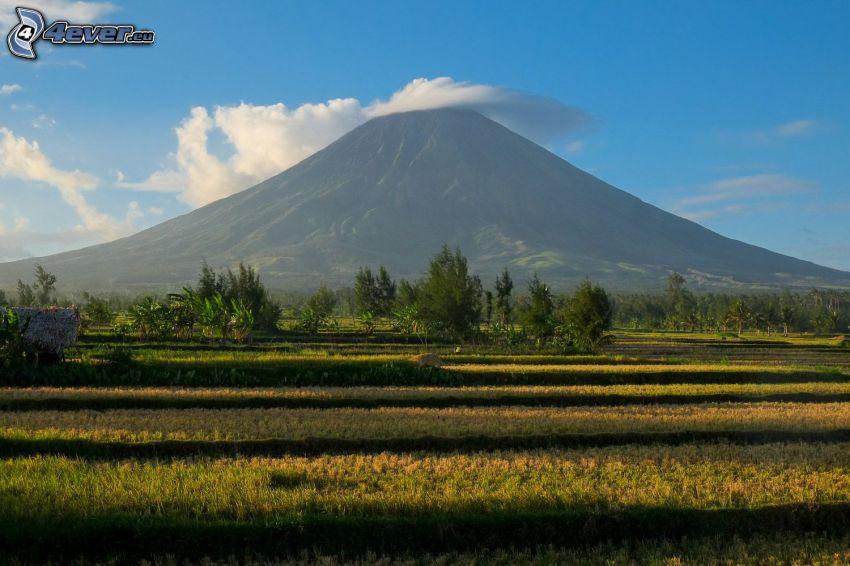 Mount Mayon, łąka, las, Filipiny