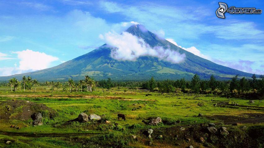 Mount Mayon, wulkan, bawół, łąka, las, Filipiny