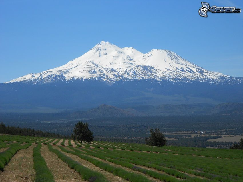 Mount Shasta, zaśnieżona góra, łąka