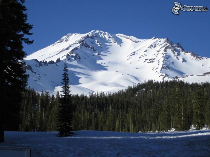 Mount Shasta, zaśnieżona góra, las