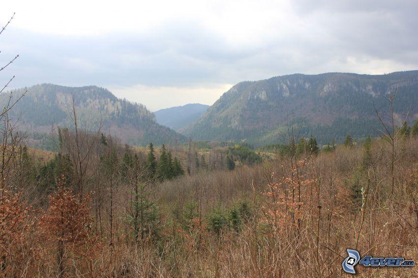Stožky, góry, las iglasty, Malá Stožka, Veľká stožka, dolina